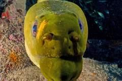 Moray Eel Close-Up