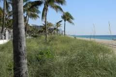 Sea oats help protect beachfront property