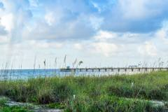Sea Oats in Lauderdale-By-The-Sea