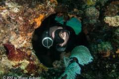 Peek A Boo Diver SS Copenhagen