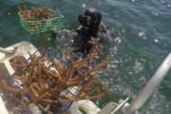 NSU Diver Picks Up Coral Fragments on Boat Platform
